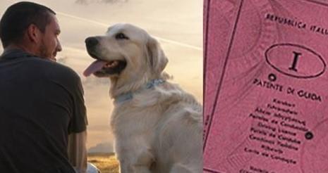 Padroni di cani, arriva il patentino – LE NUOVE REGOLE OBBLIGATORIE PER CHI HA UN ANIMALE DOMESTICO
