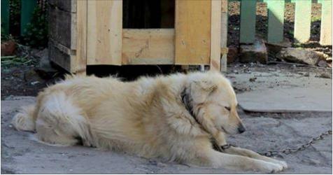 Il cane non può essere lasciato incustodito in giardino: Ecco quanto pagherai di multa…